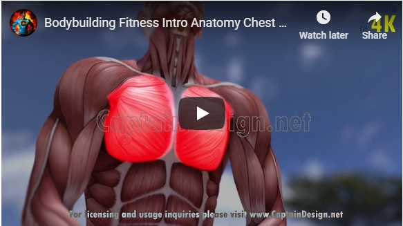 Stock video: Bodybuilding Fitness Intro Anatomy Chest Muscles